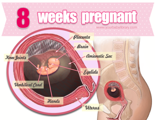 8 week of pregnancy