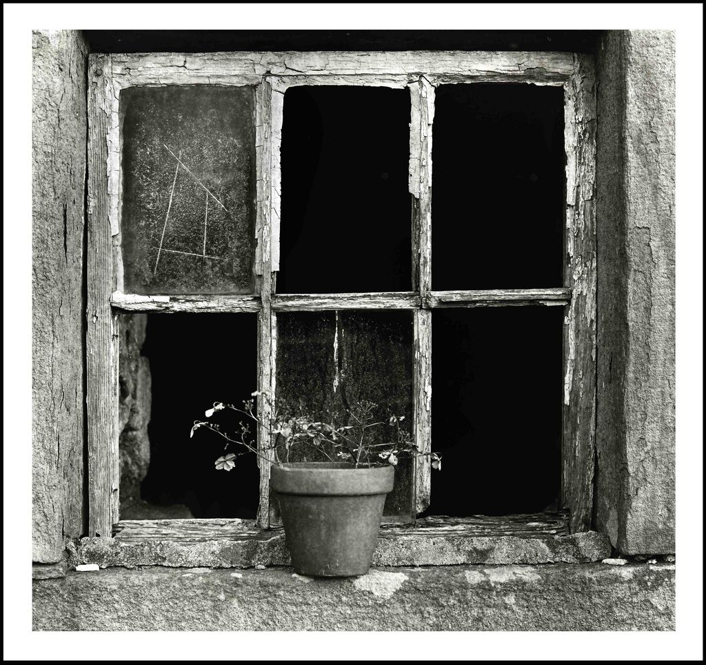 Window♥