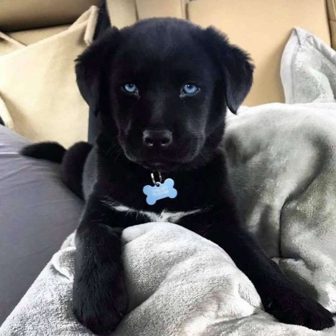 How Many Pets Do You Have Follow Cloutposted That For More Puppy Dog Pictures Puppies Cute Baby Animals