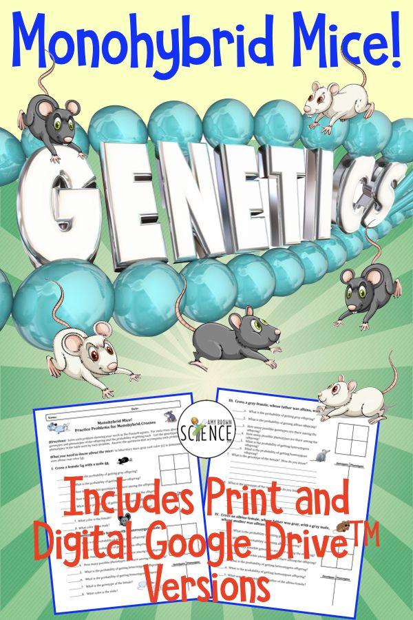 Genetics Punnett Square Practice | Printable and Google ...