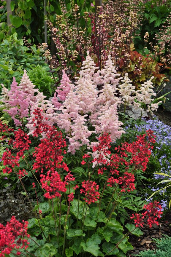 Great Perennials For Shade All Of Them Deer Resistant Garden