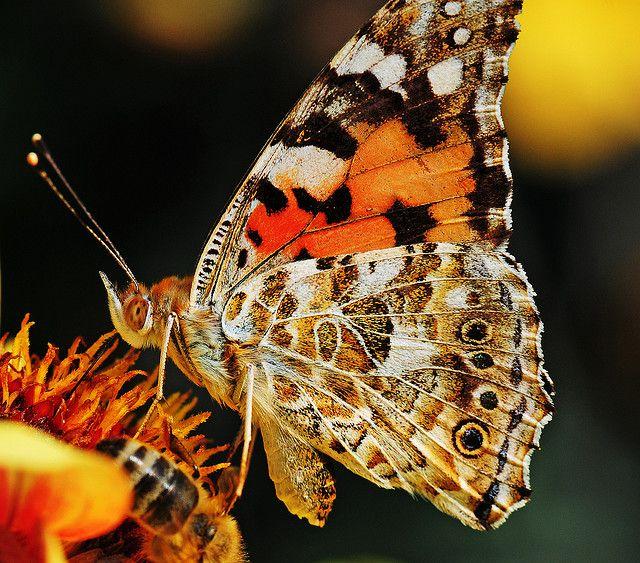 Butterfly by Habub3, via Flickr