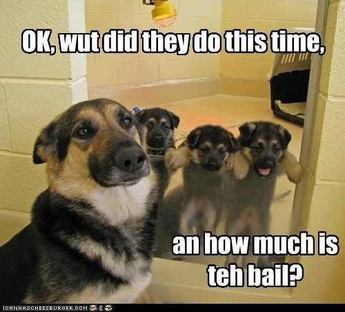funny german shepherd pics | Hotdog - german shepherd - Page 2 - Loldogs n Cute Puppies - funny ...::