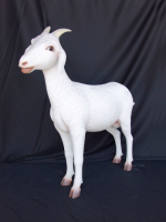 Goat (life-size) levensgroot