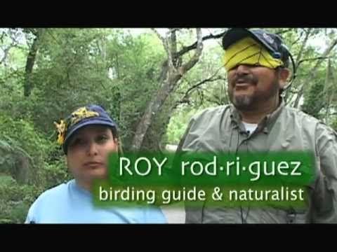 Birding by Ear video on YouTube