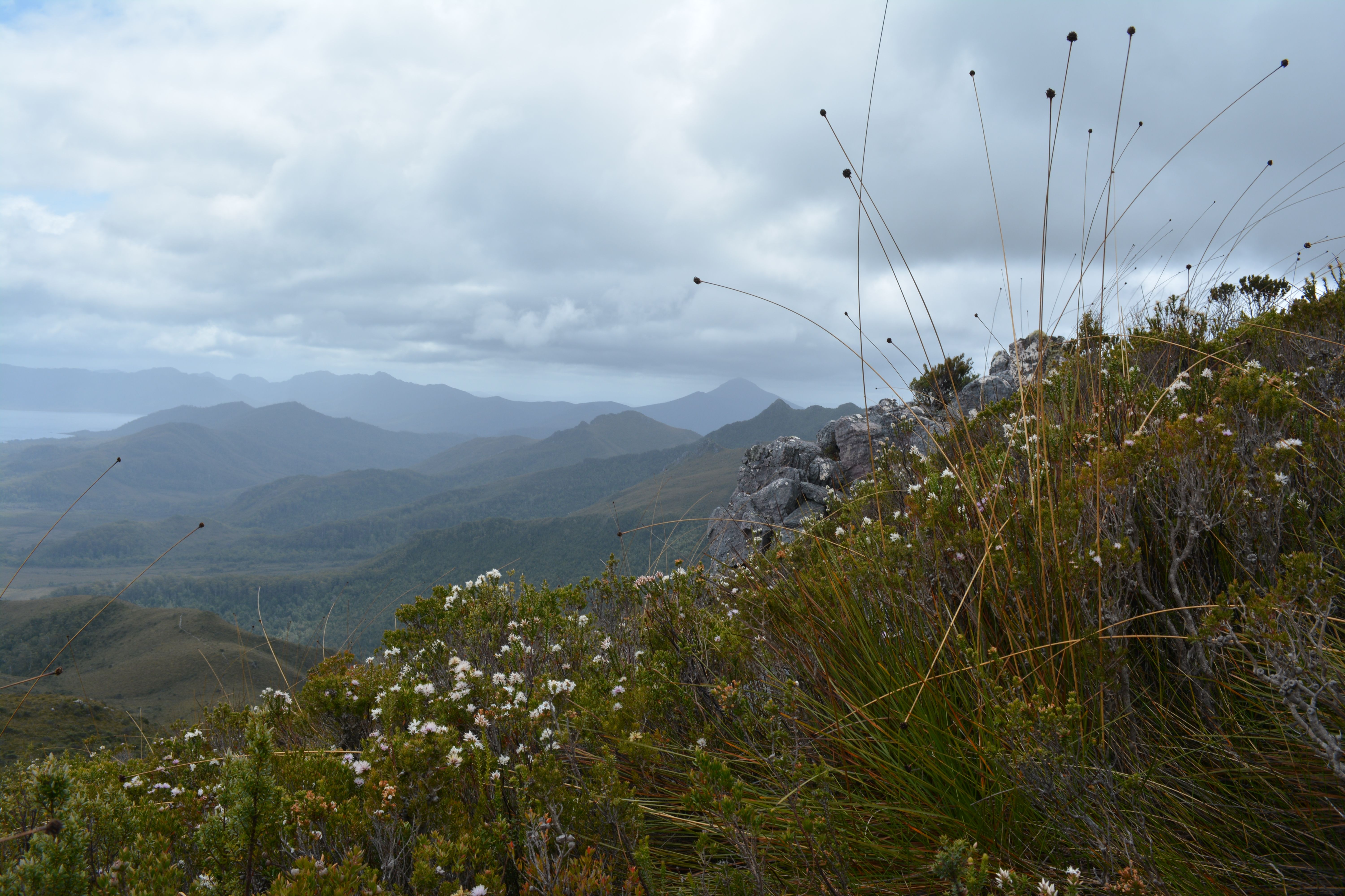 This photo was taken by Naomi Nielsen while attempting to summit Mount Anne in South East Tasmania, capturing a feature of the landscape - button grass