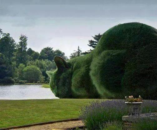 Cat hedge