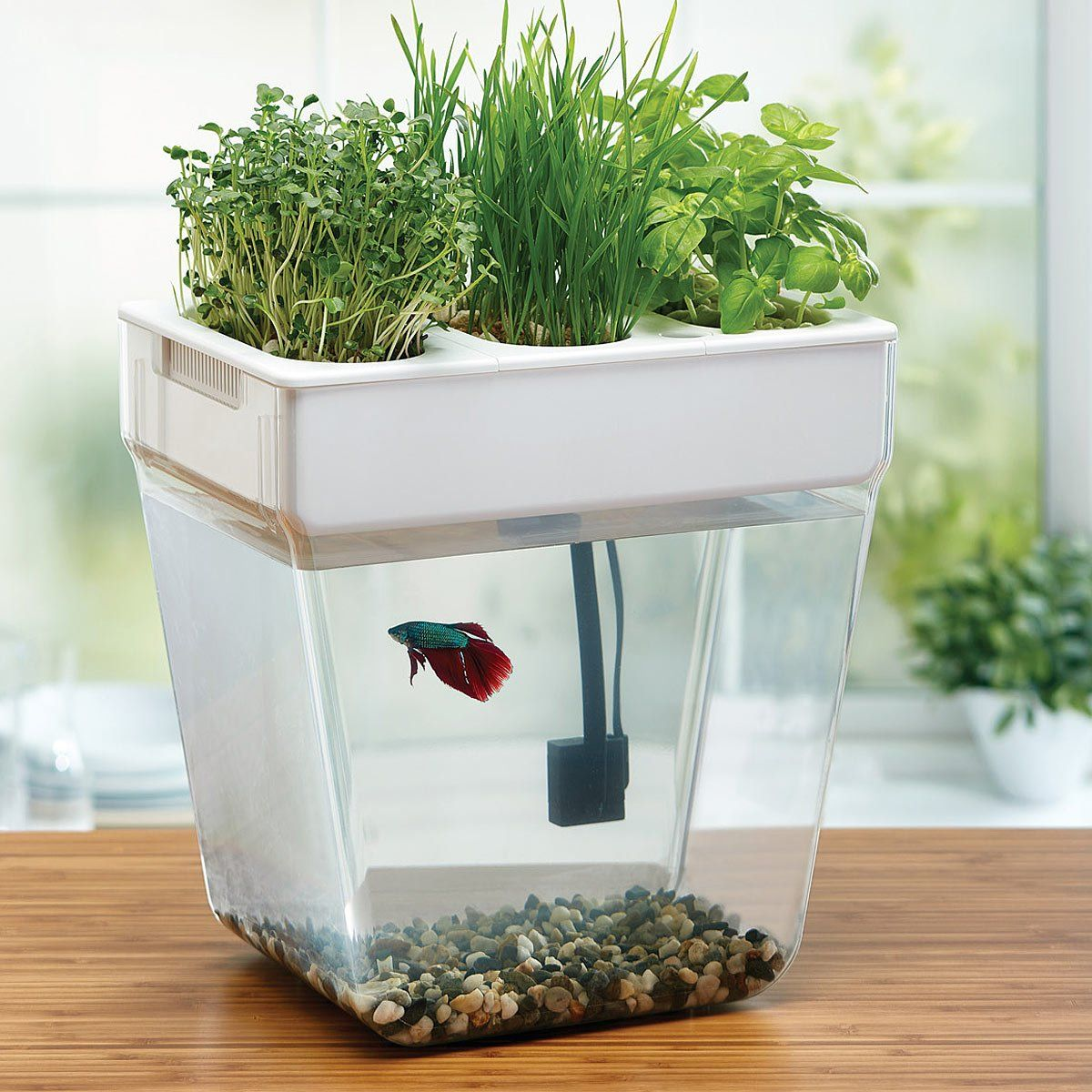 Water Garden Deluxe | Betta fish, Betta and Fish tanks