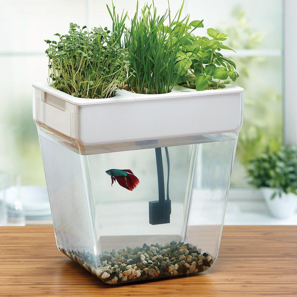 Water Garden Deluxe | Betta fish, Betta and Fish tanks