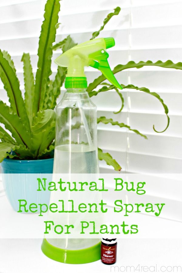 Natural Bug Repellent Spray For Plants Natural Bug Repellent