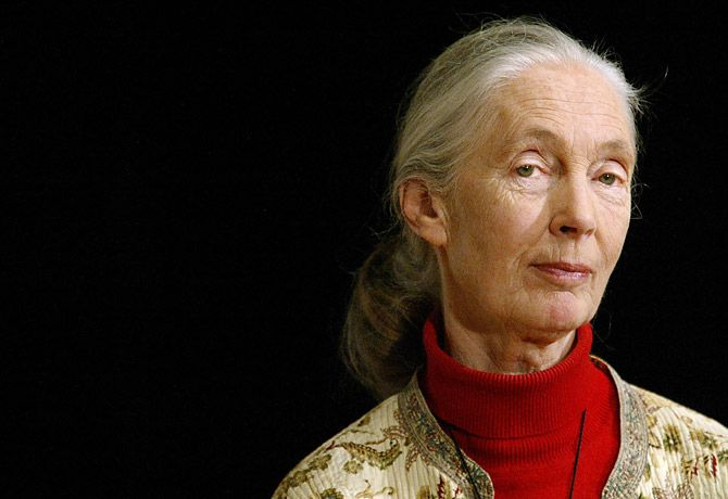 """What Jane Goodall means to me: """"So long as we have the willingness to understand, we can gain the ability to change our world."""""""