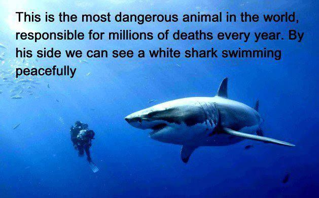 The most dangerous animal in the world....