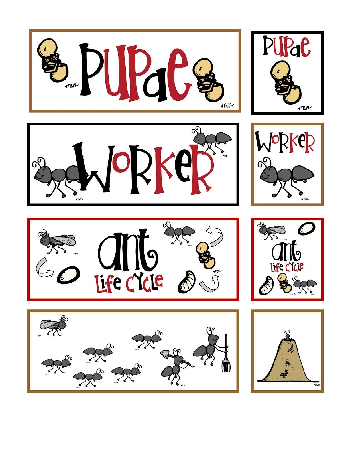 2 00 Preschool Printables Ant Life Cycle And Other