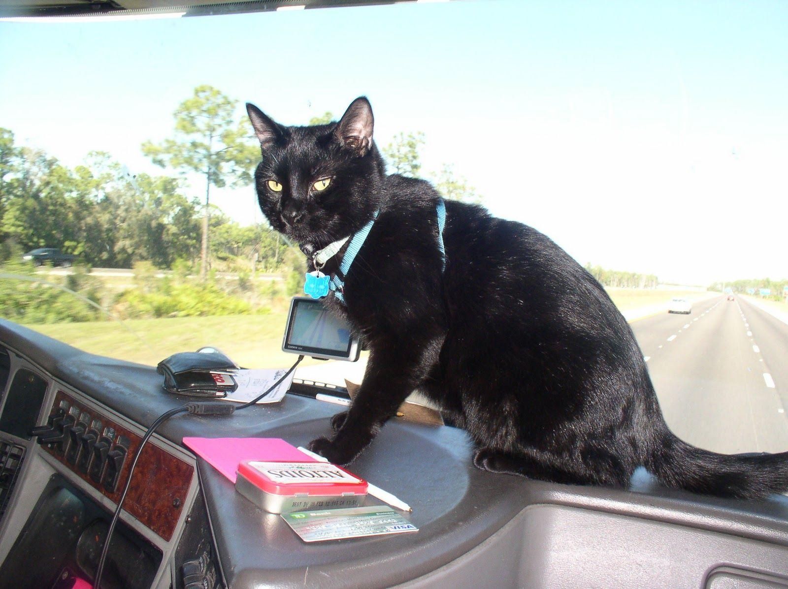 Trucking Cat Daytona Driving School Trucks Cat Love