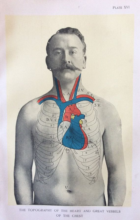 Antique Anatomy Bookplate Print 1900s Heart Chest Moustache 1908 Vintage Medical Diagram Anatomy Science Illustration Heart Art Projects