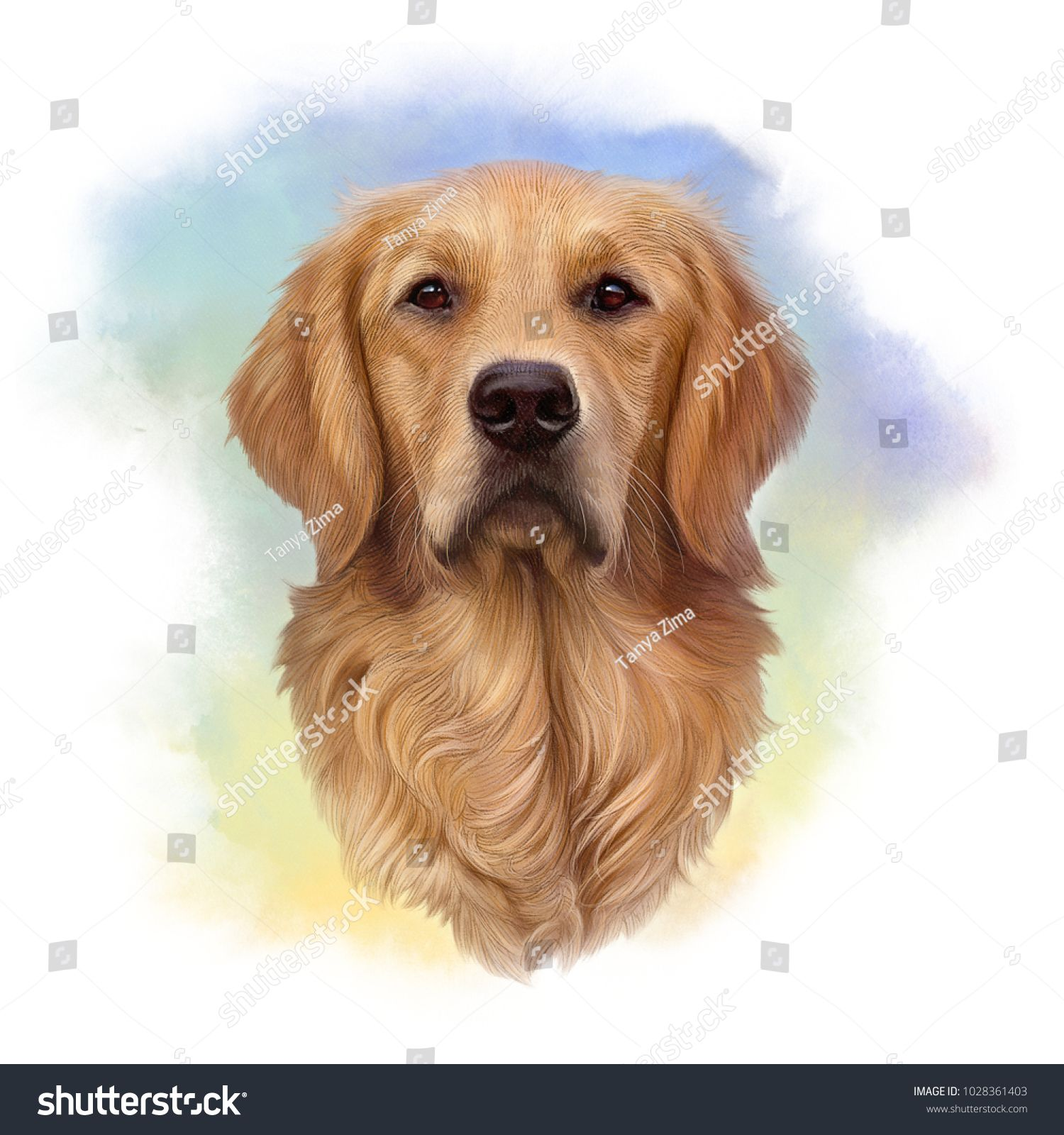 Illustration Of A Golden Retriever Guide Dog A Disability