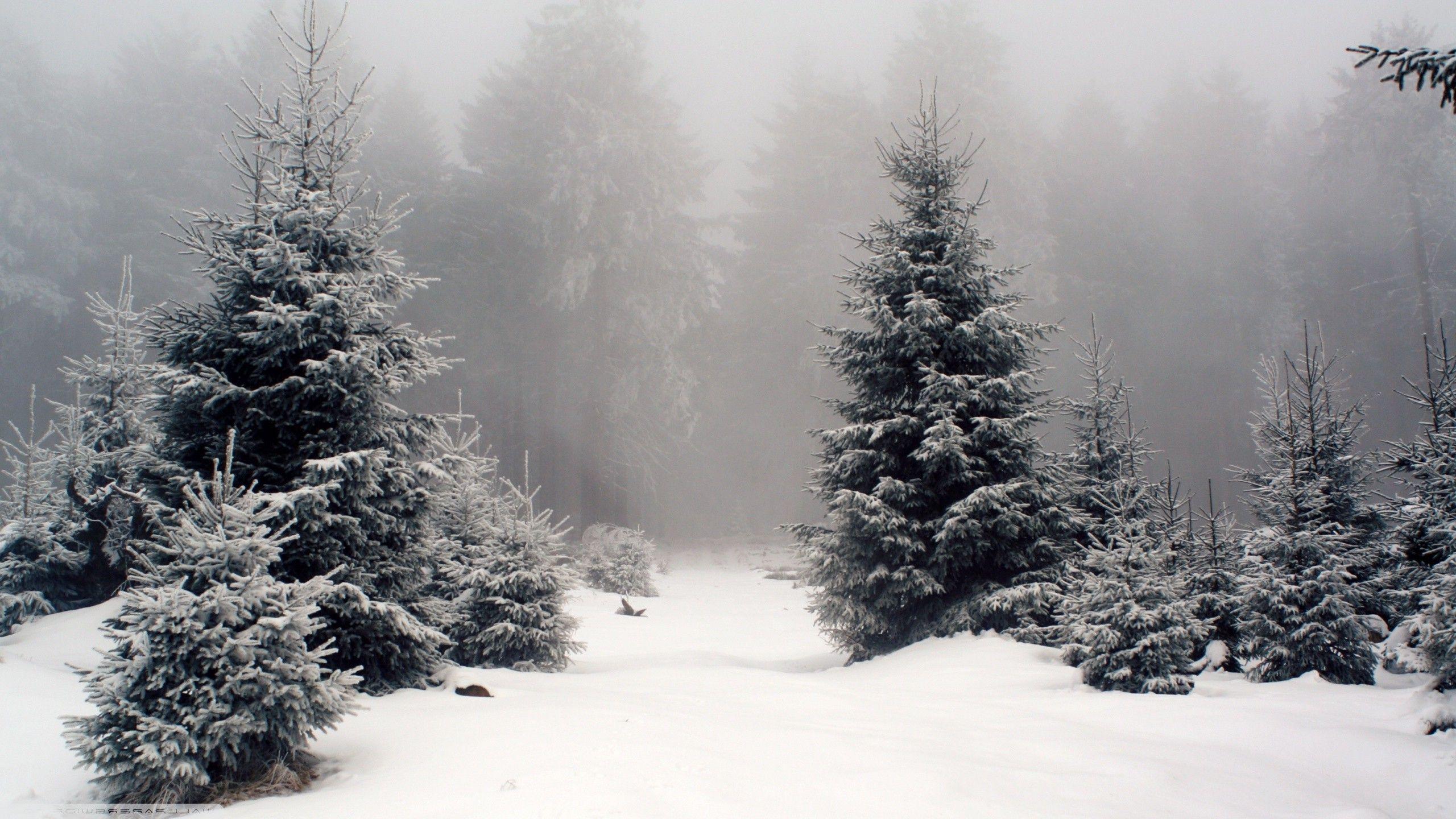 A Place In The Snow Winter Wallpaper Desktop Forest Wallpaper Winter Desktop Background Hd wallpaper snow winter forest trees