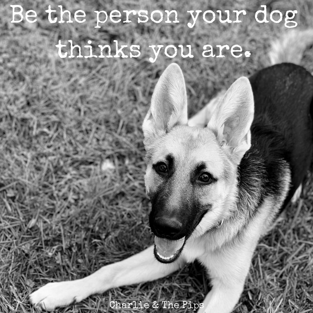 Motivational Quotes With Dog Pictures