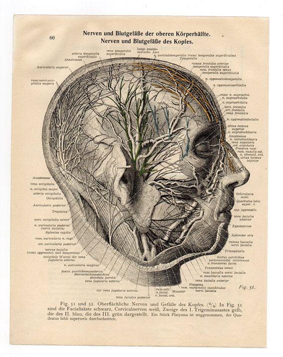 Medical anatomical Illustration print 1933 skull skeleton anatomy page nude human body old anatomic diagram brain upcycle recycle repurpose