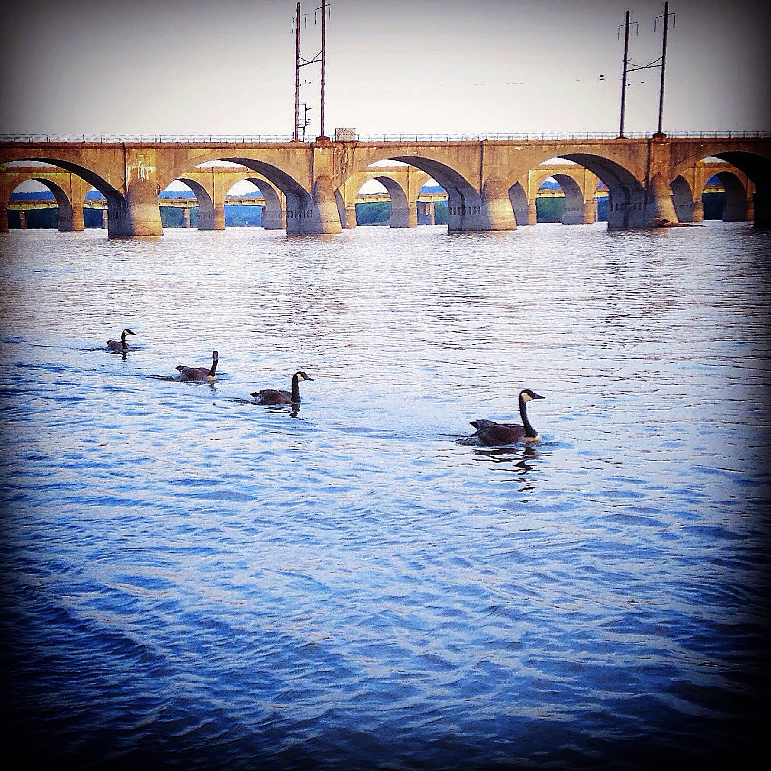 Ducks in a row harrisburg pennsylvania