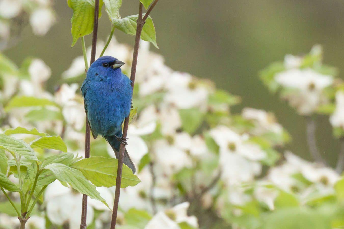 Outings To Satisfy Your Inner Bird Nerd Asheville Nc S Official Travel Site Bird Watching Wild Birds Unlimited Bird Species