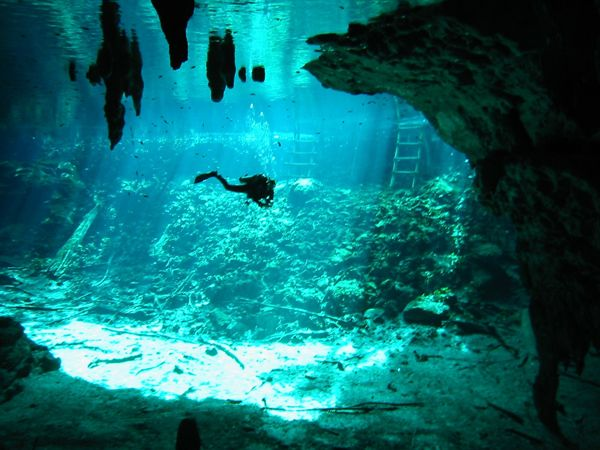 Cenote Diving In Gran Cenote Abyss Dive Center Cenotes Mexico