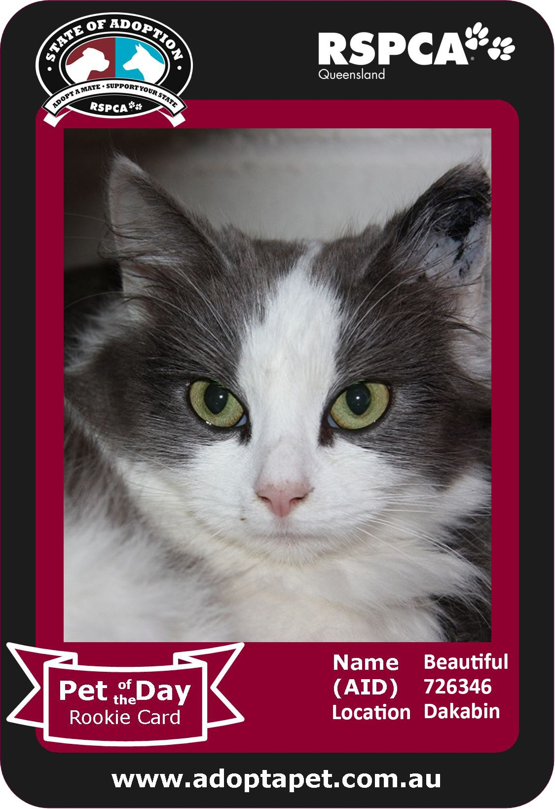 "My name is ""Beautiful"". I am a lovely, longer haired girl seeking a loving family. I'm no trouble at all. In fact I am a delight to have as a friend. I am kitty litter box trained and don't mind the company of children. I do however have a pale face with pink skin, so I would be best suited to being an indoor only cat. I'm just $99 to adopt so come see me at the Dakabin RSPCA Centre #adoptapet #rspcaqld #cat #SOA2013 #adopt #rescuepet #buyacat"