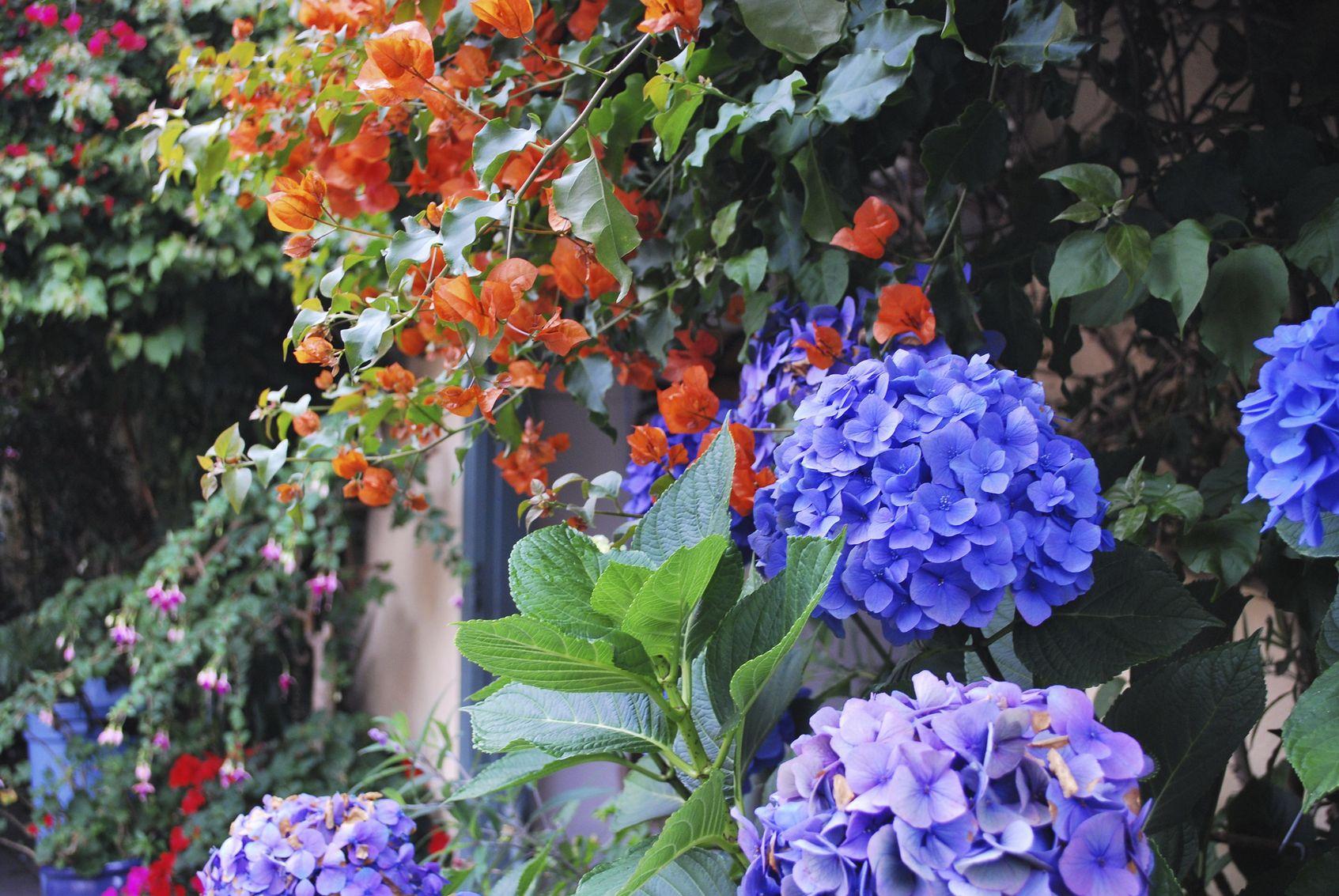 Hydrangea Plant Companions Tips On Planting Next To Hydrangeas Planting Hydrangeas Hydrangea Landscaping Garden Shrubs