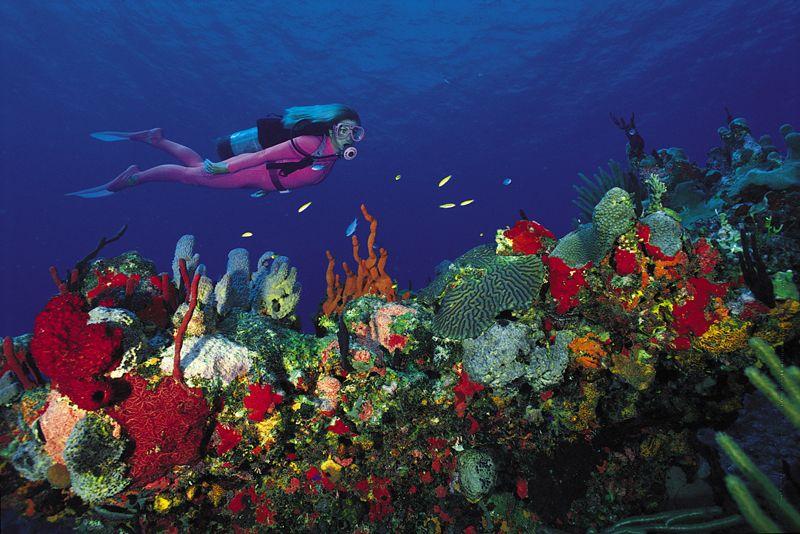 the island in diving virgin