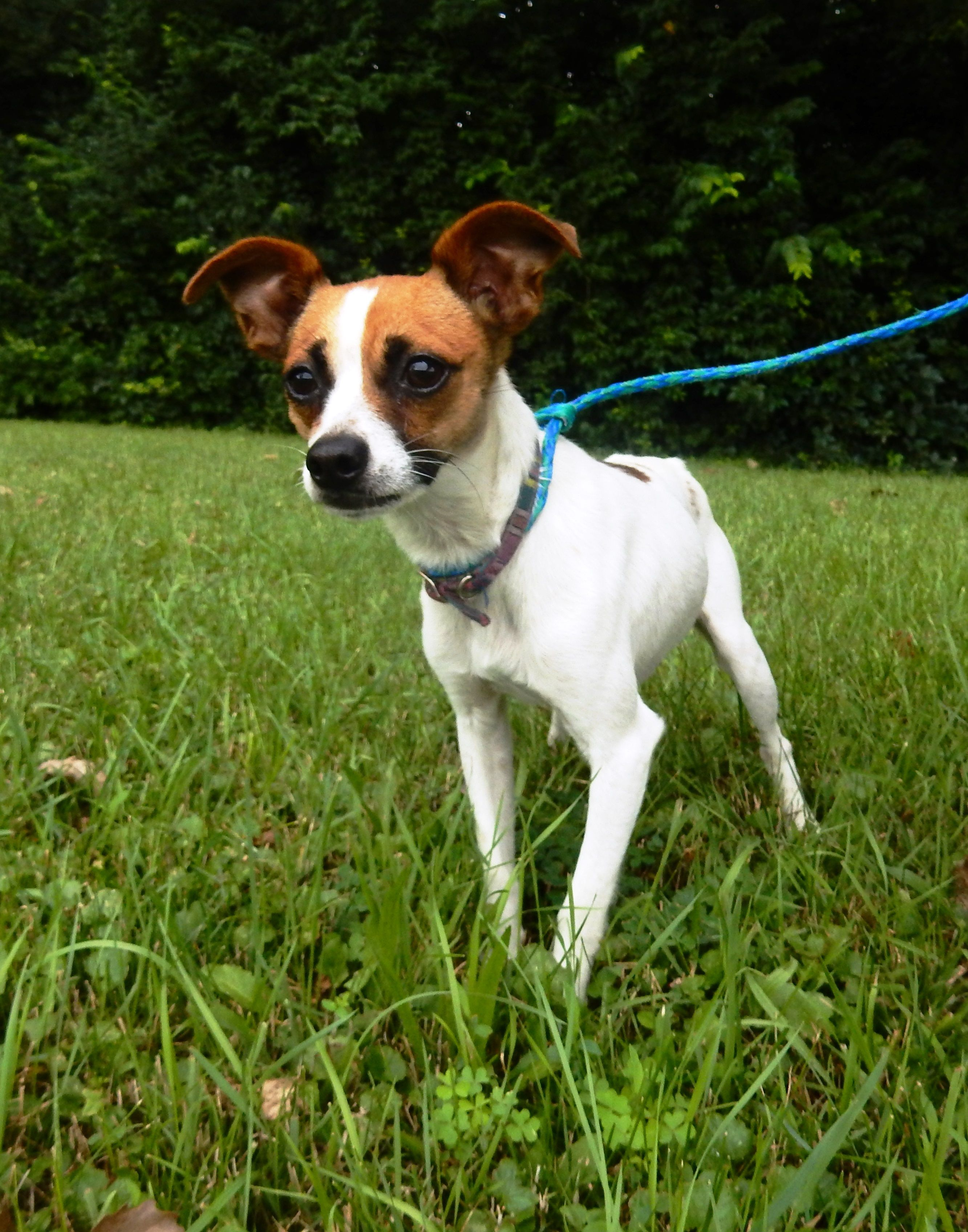 Adopt Mason on Petfinder Dog control, Terrier, Dogs