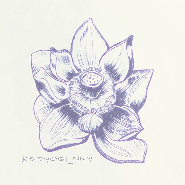 Illustrations Open Minded Lotus Flower