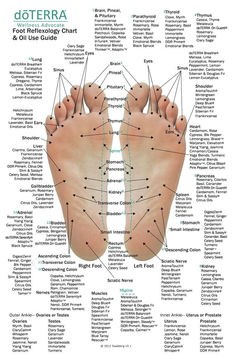 10 Pack - MINI Reflexology Chart & Essential Oil U