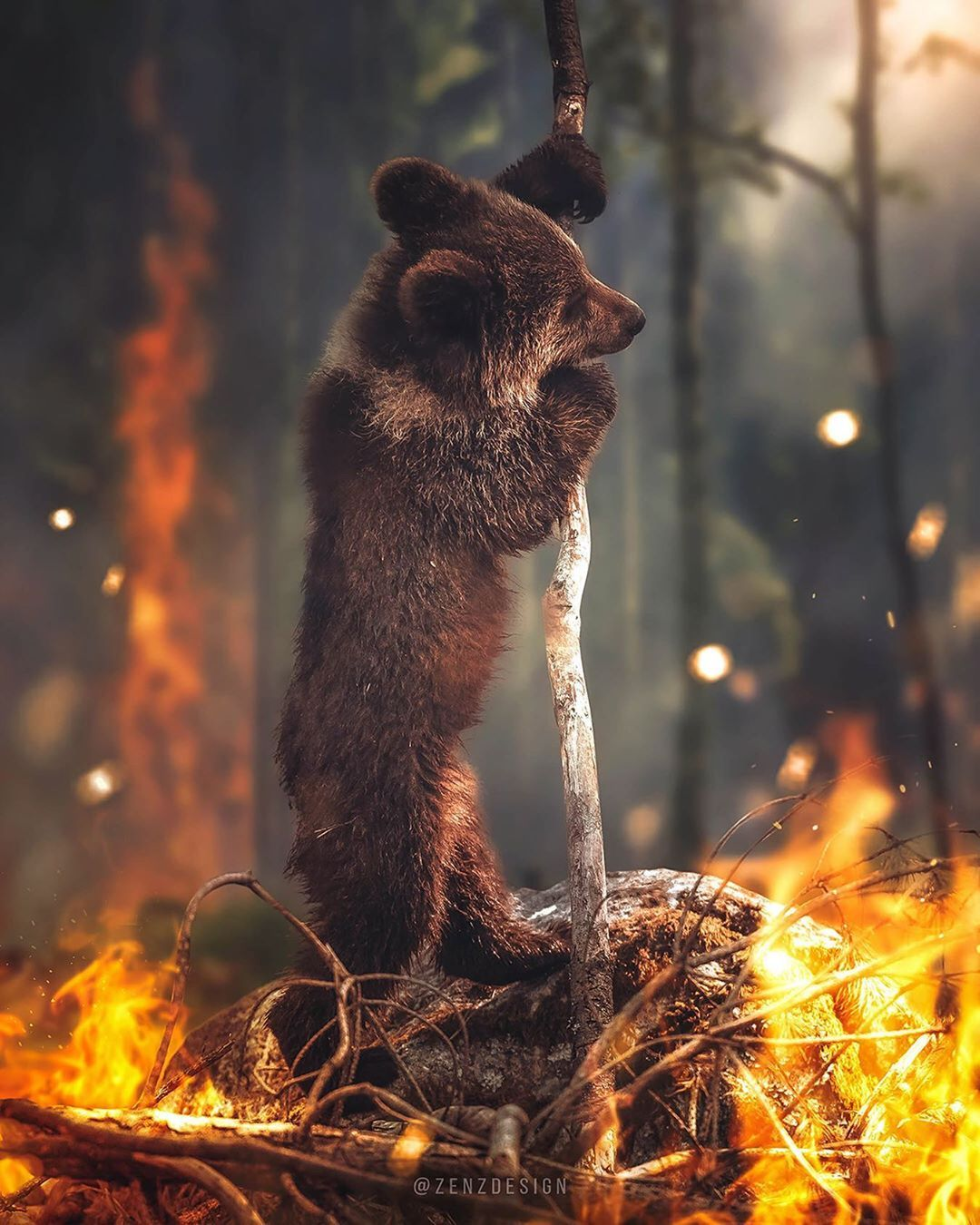 Zenja Gammer On Instagram Siberia Is On Fire It Is Not Economically Feasible To Extinguish A Fire In Siberia The Animal Planet Global Warming Art Fire
