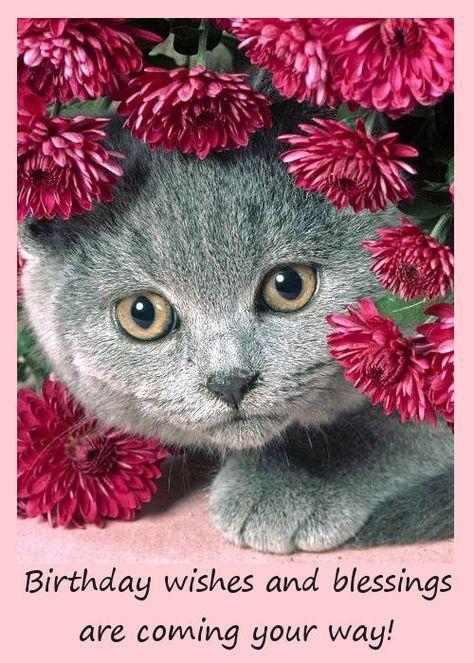 cat birthday cards online  cat birthday greeting cards