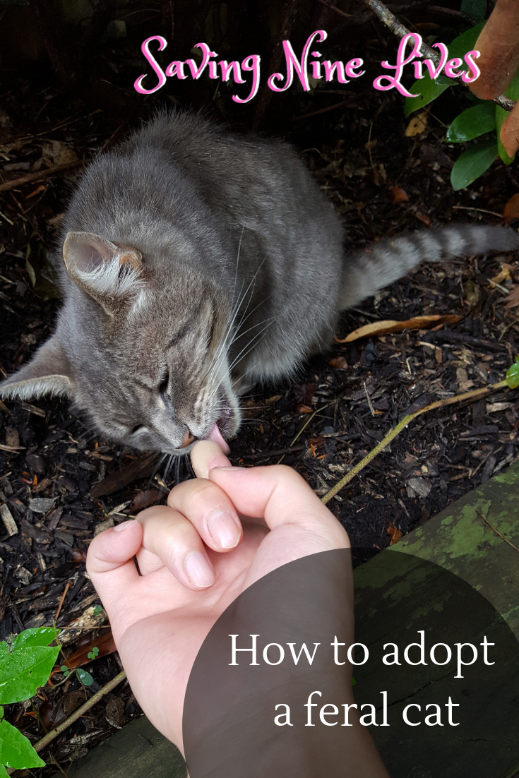 Adopting A Cat Tips And Tricks With Time And Patience A Feral Cat Can Be Adopted And Transitioned To An Indoor Lifestyle Catadopti Feral Cats Cats Cat Care