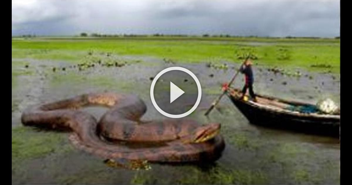 Giant Snake In The World Biggest Snake Found On Earth World