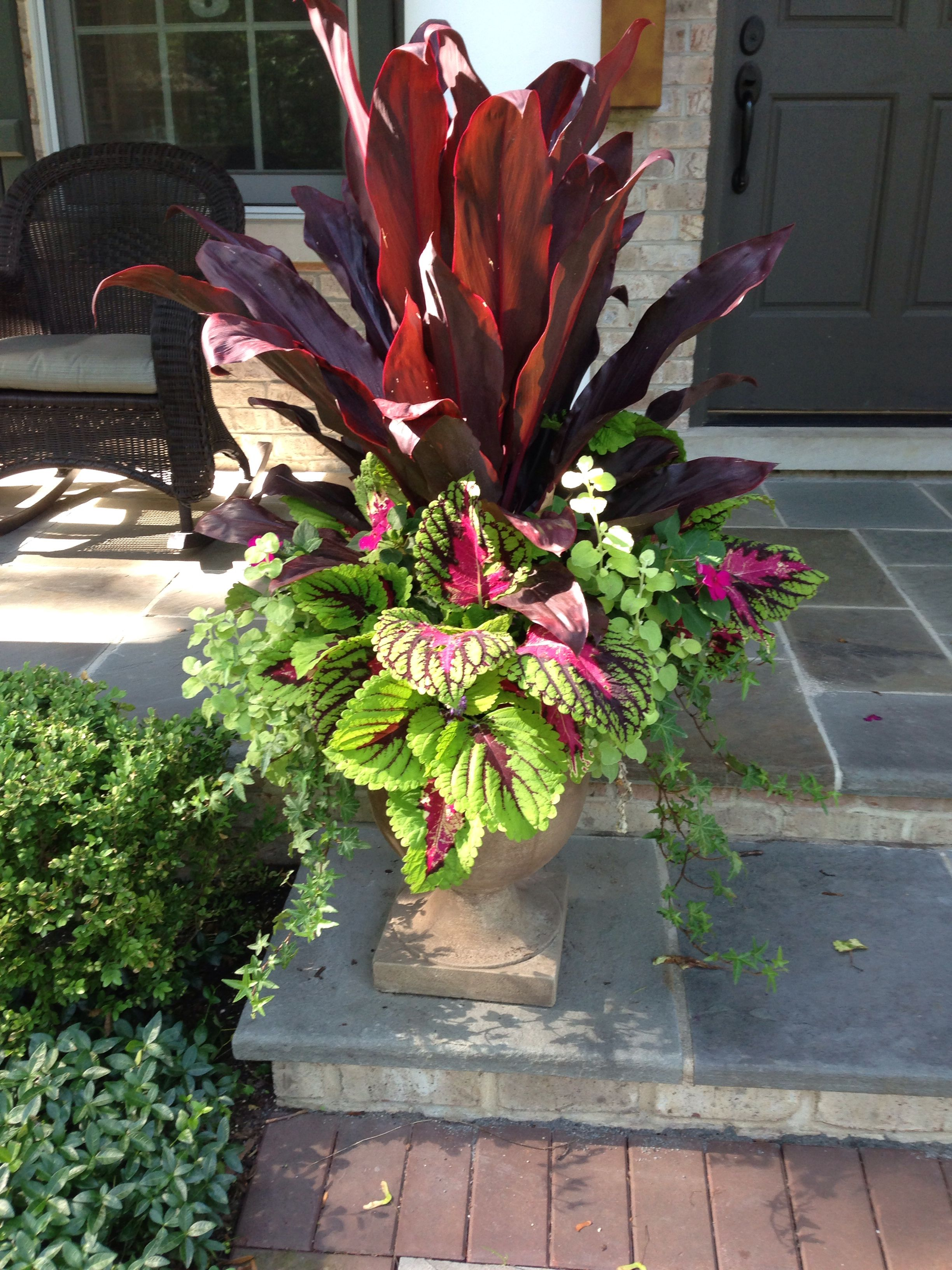 Pretty And Not Too Fussy Redpink Tropical Plant In Center Or A