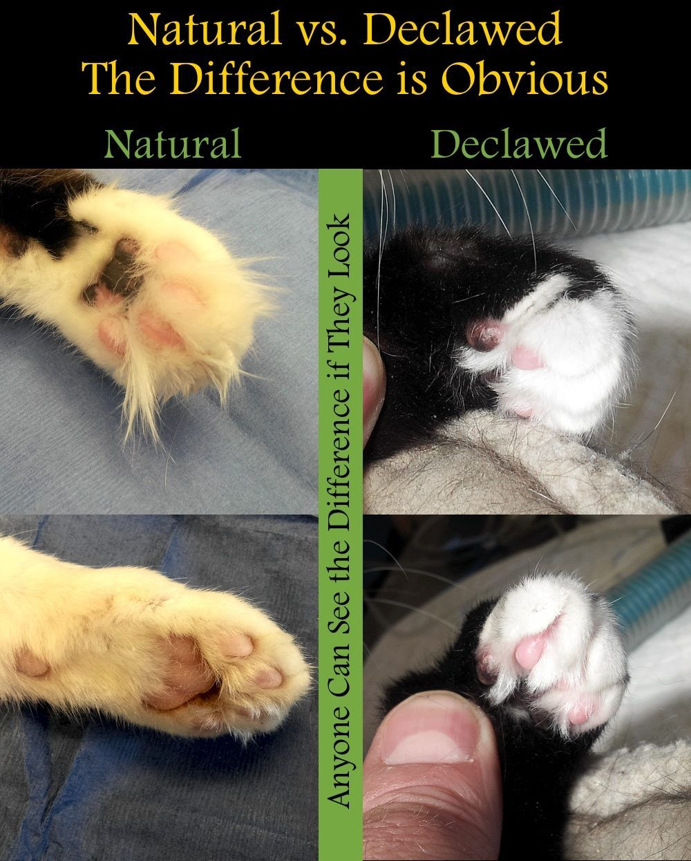 Https Www Facebook Com Animalark Animal Ark Is Minnesota S Largest No Kill Animal Welfare Organization After Seeing The Movie Soft Paws Paw Project Animals