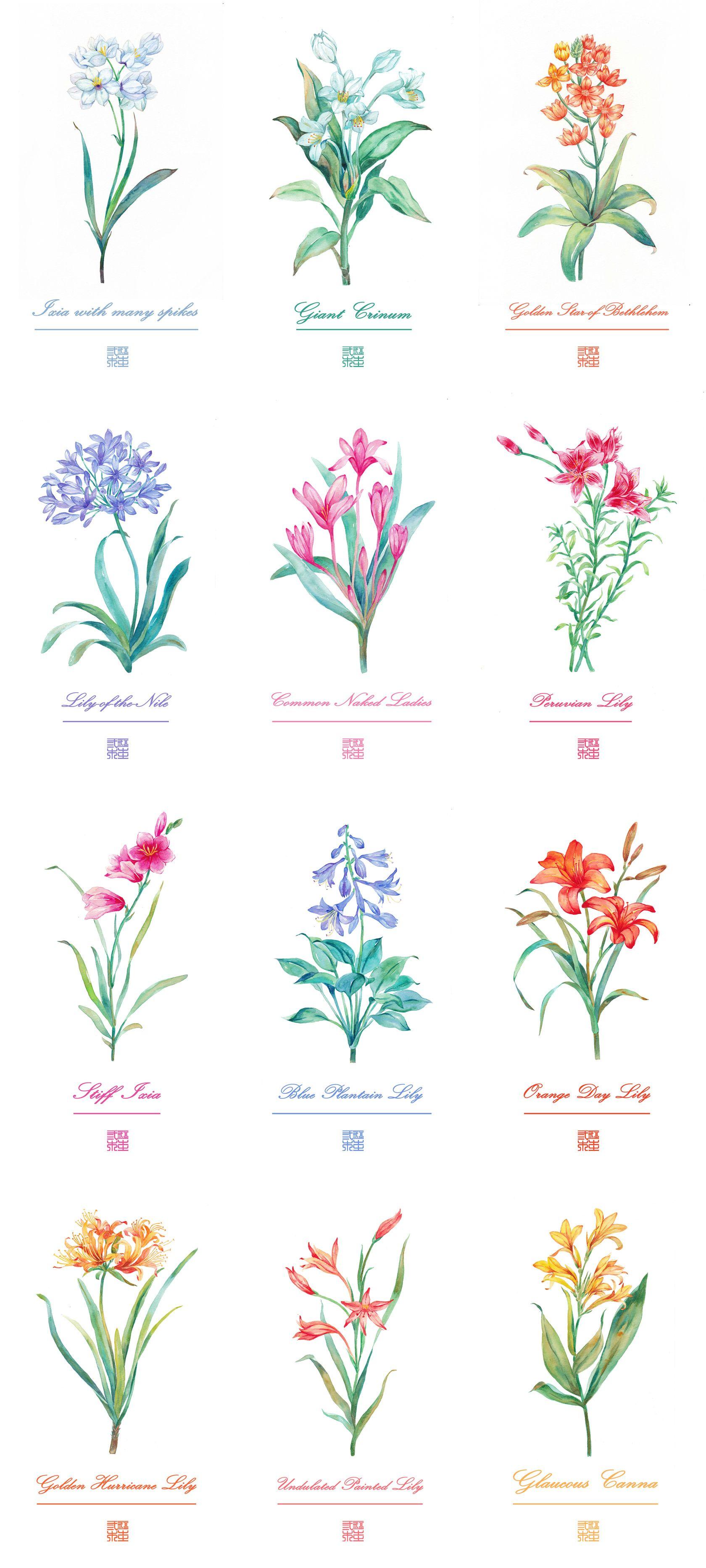 Pin by Natalia Mars on {Des Fleurs} Wildflower tattoo
