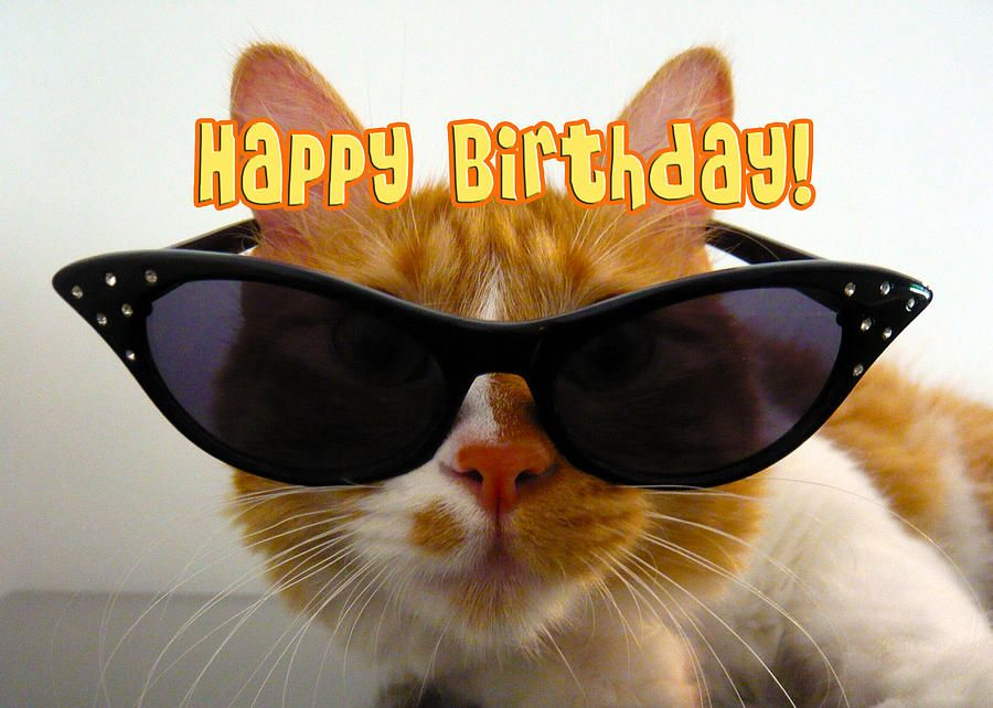 Happy-birthday-cool-cat-michelle-dokos.jpg (900×642