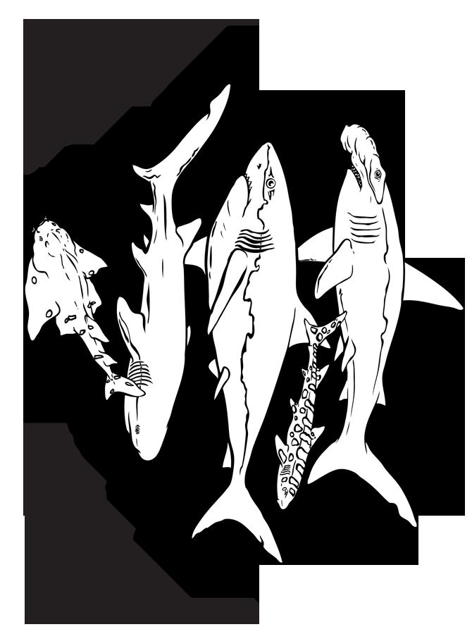 Monterey Aquarium Coloring Pages   Coloring Pages