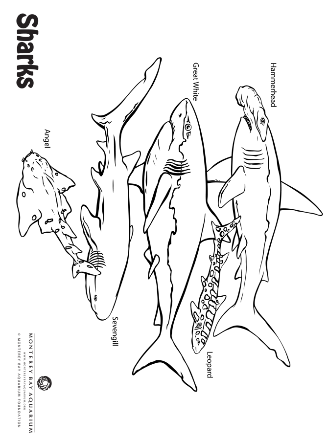 Sea of Sharks coloring page from Monterey Bay Aquarium | Sharks for ...
