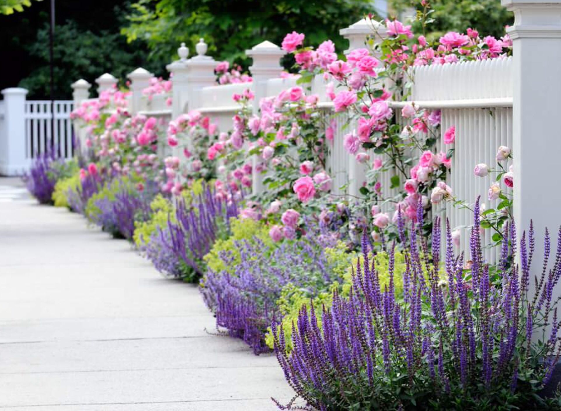 Houzz - Flowers with White Fence.