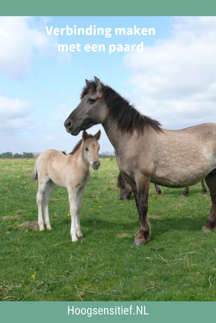 Verbinding maken met een paard ⋆ Hoogsensitief.NL
