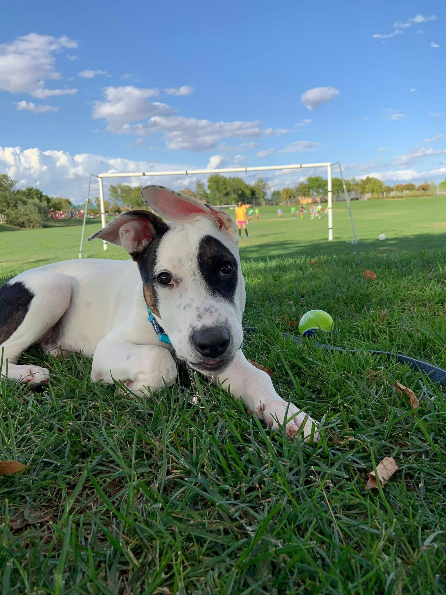 Adopt Lucas! on in 2020 (With images) Terrier mix dogs