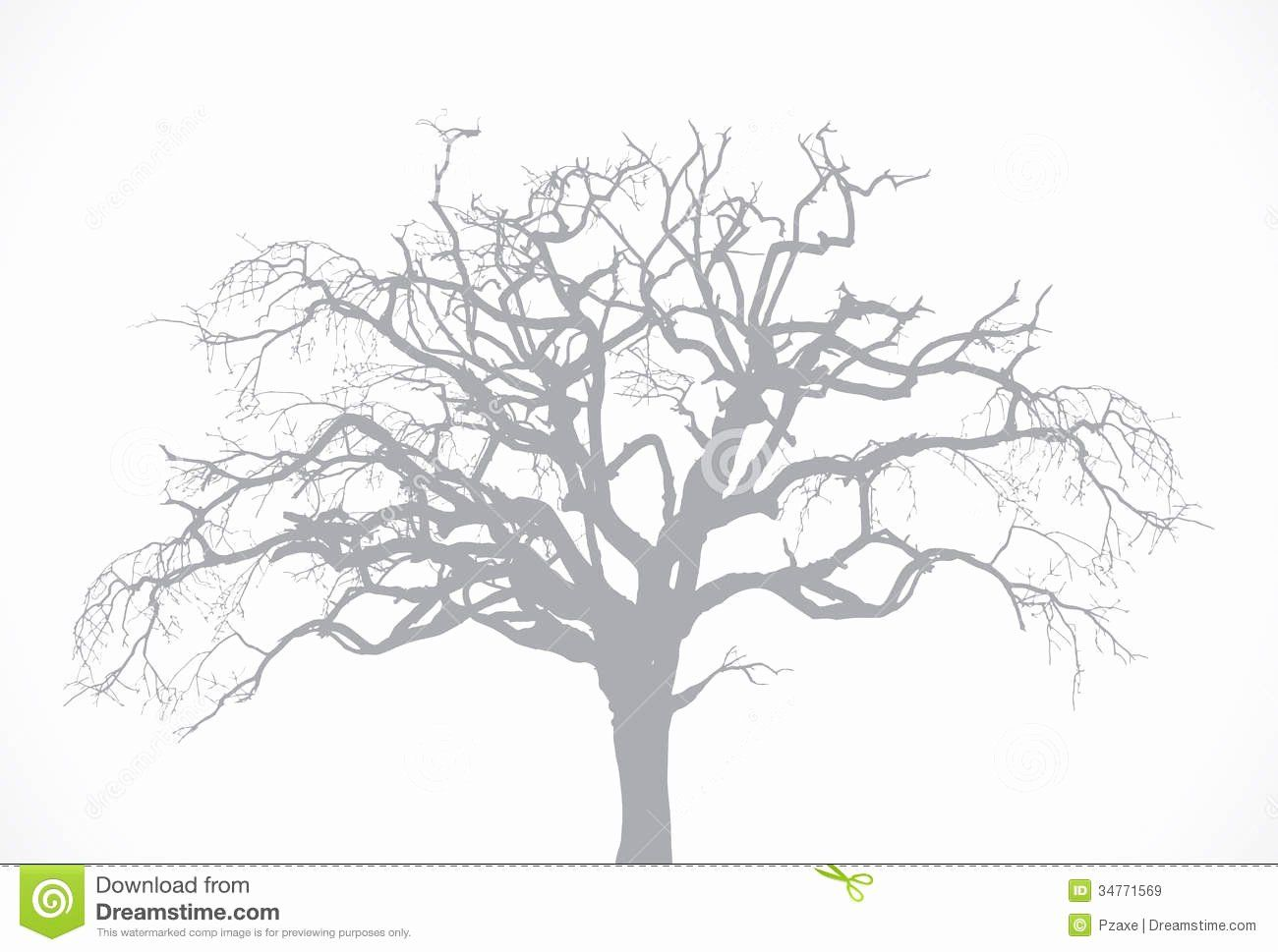 Tree Without Leaves Coloring Page Elegant Vector Bare Old Dry Dead