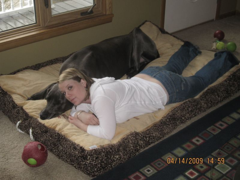 Old Toddler Bed Now A Dog Bed For Our Great Dane With Images