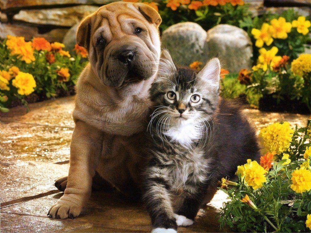 Kitten and Puppy Wallpaper HD Wallpapers Pinterest