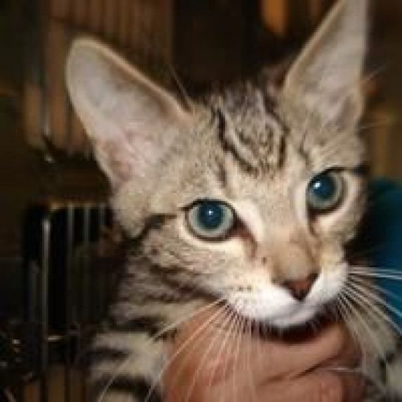 Available pets at Citrus County Animal Services in