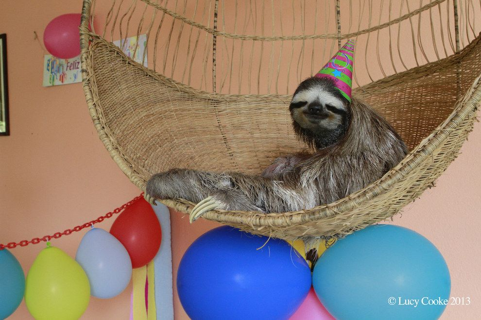 Birthday sloths.   The 29 Cutest Sloths That Ever Slothed